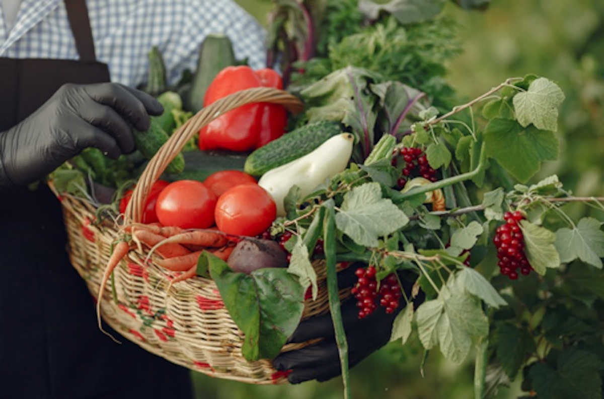 Road to Vegan Eating: 5 Easy to Grow Vegetables for New Gardeners